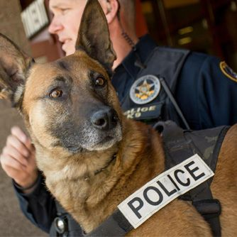 Police Dogs Retire