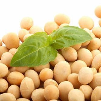 American Soy Beans in China